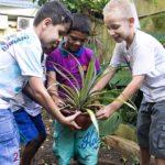 Kinder tragen eine Pflanze
